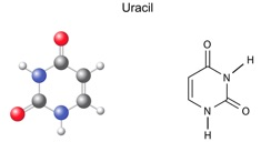 Structural and model of uracil