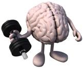brain organ weight training--cartoon