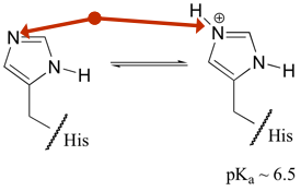 Histidine, pH sensor amongst the amino acid building blocks