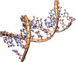 Double stranded DNA molecule